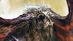 Soul Sacrifice vignette logo 10.05.2012
